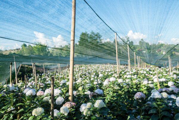 30% shade hail/mesh cover