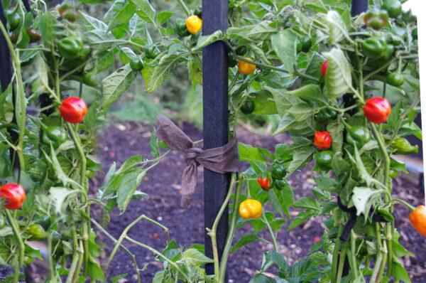 Eco Plant Tie